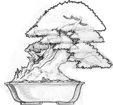 Disegni andolfo for Versare disegni e progetti